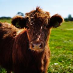 animal-blur-bull-162240-1024×683
