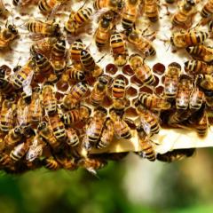 apiculture-naturelle-1024×683